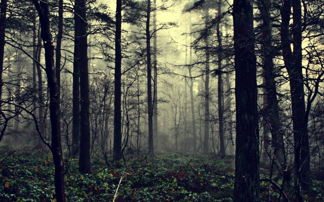 Misty Forest Of Illusions / �������� ��� �������