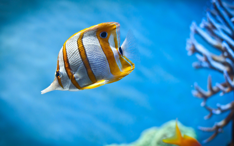 Обои на рабочий стол животные рыбы