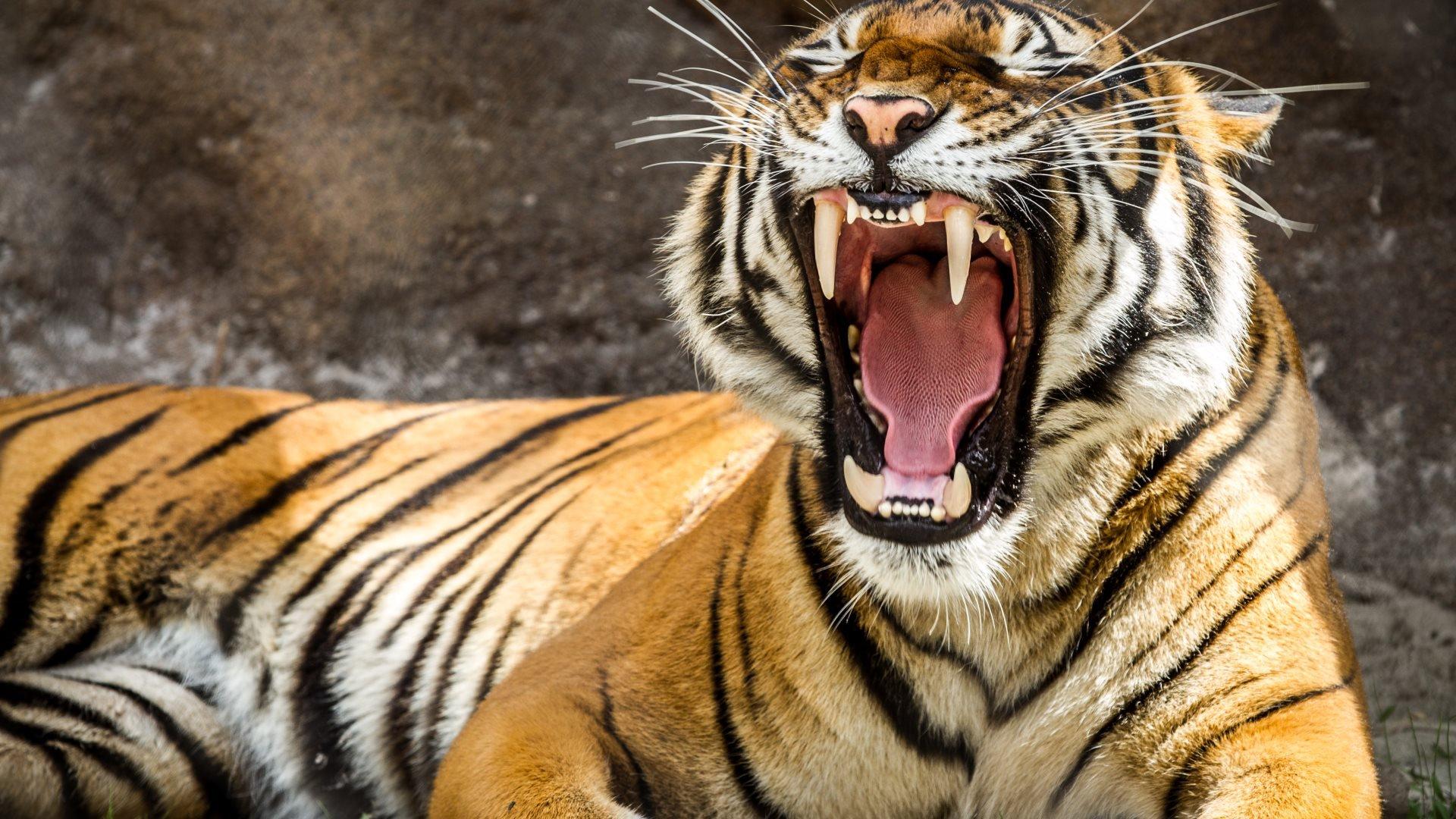 Espectaculares fotos de animales 72