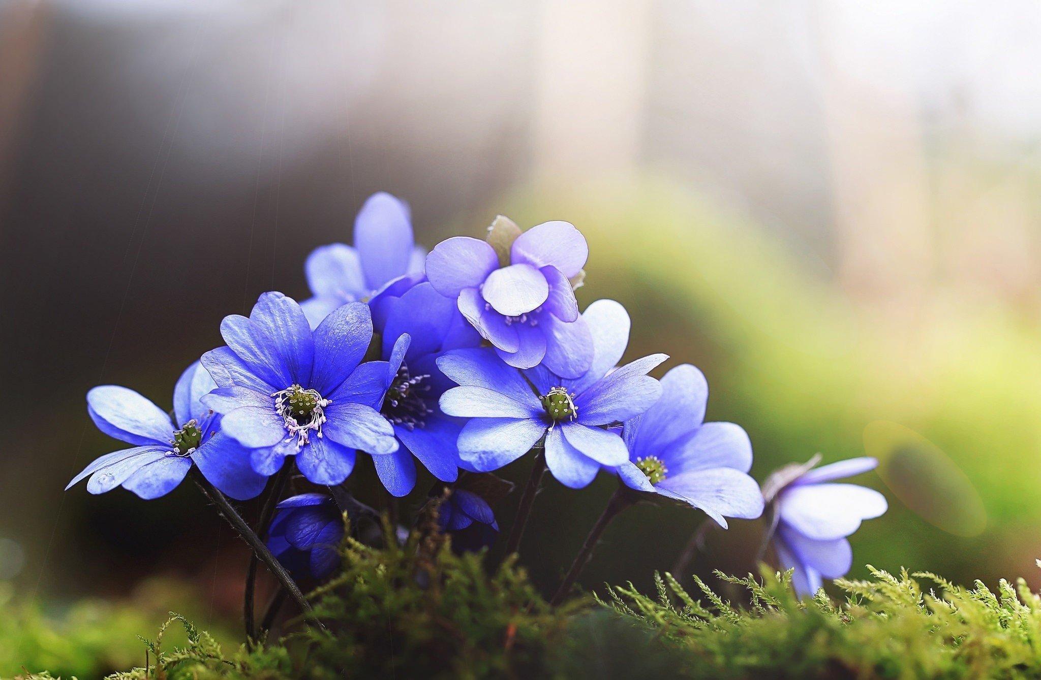 Цветы фиолетовый