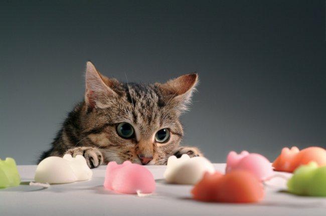 Кот охотится на мышей