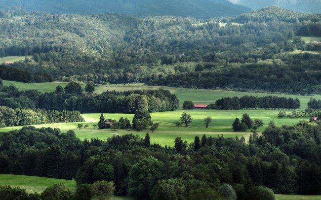 Лесная долина