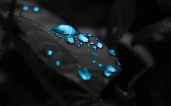 Капли росы на листе