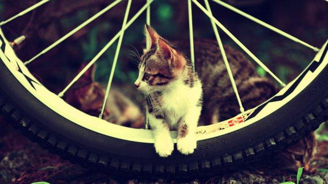 Катёнок между спицами колеса велосипеда