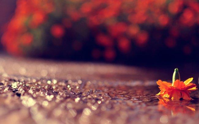 Лежащий цветок на дороге