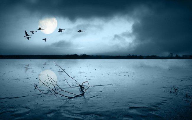 Пролитающие над озером лебеди