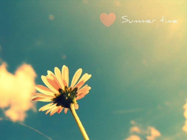 Летний цветок