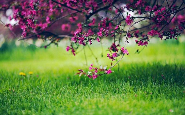 Цветущее растение над травой
