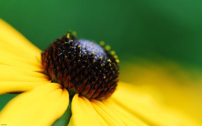 Золотой цветок