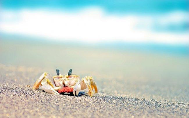 Маленький краб на пляже
