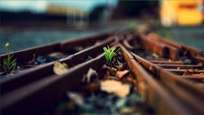 Железная дорога прорастает травой