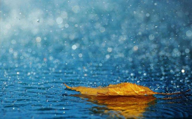 Осенний листок лежит в луже во время дождя
