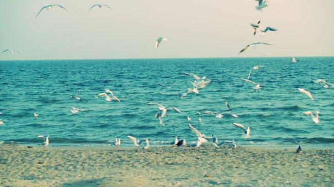 Чайки возле моря