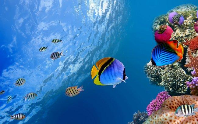 Тропические рыбки в океане