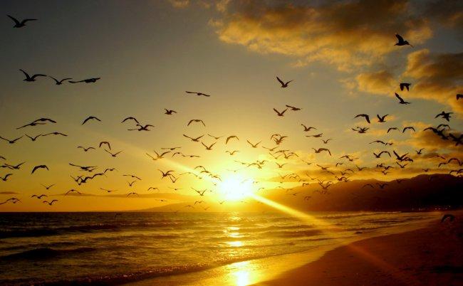 Чайки у берега моря на фоне солнца