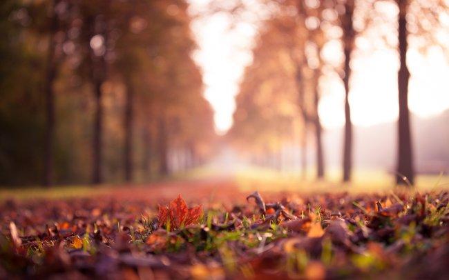 Кленовые листья на траве