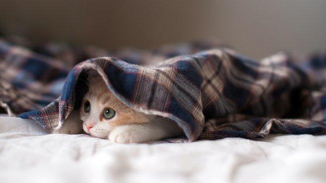 Котенок накрыт пледом