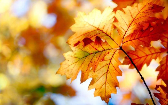 Пожелтевшие листья