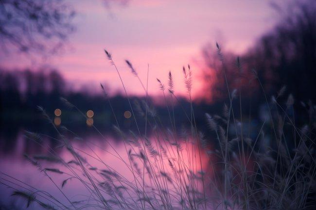 Трава у озера