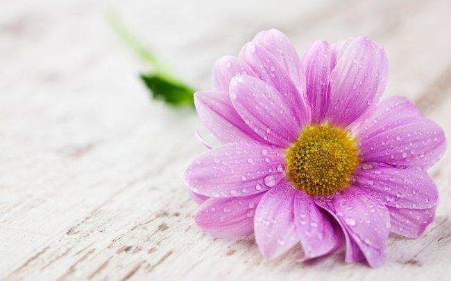 капли воды на лепестках цветка
