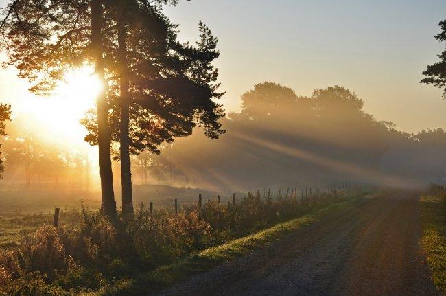 Дорога в утренних лучах солнца