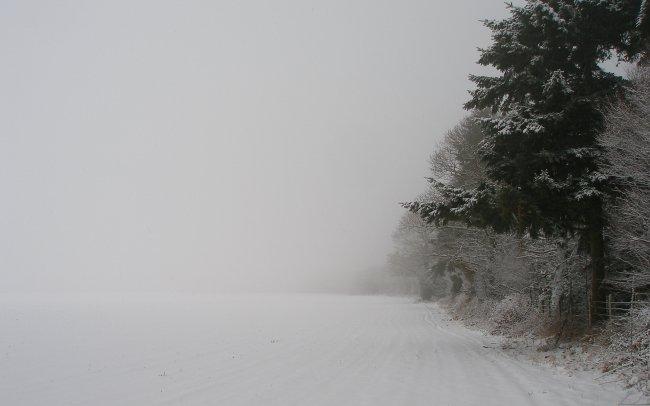 Деревья и поле покрыты снегом
