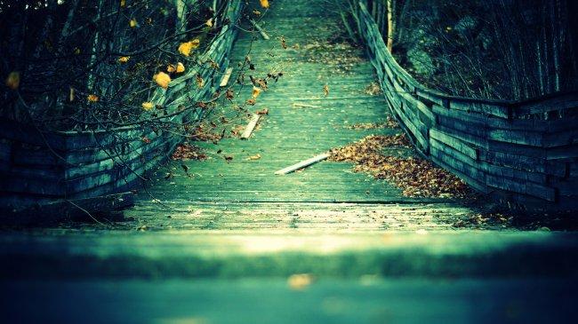Листья на мосту