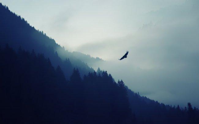 Орёл в тумане на фоне гор