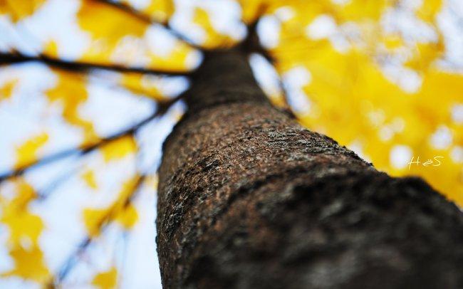 Ствол осеннего дерева