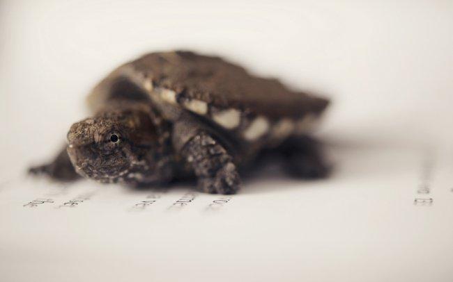 Черепаха на листе бумаги