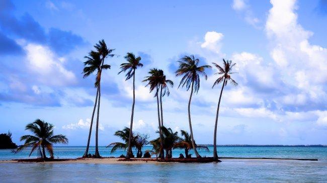 Маленький остров с пальмами в тропиках