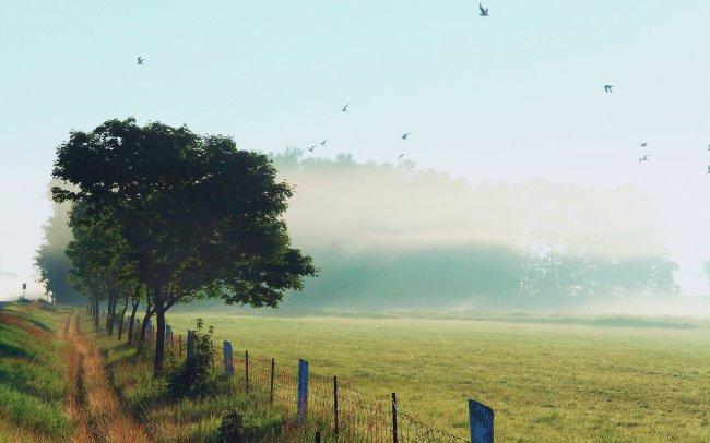 Утро природа
