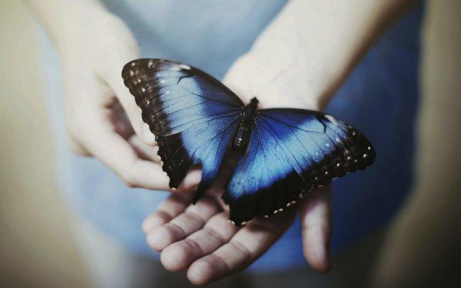 Бабочка с синими крыльями