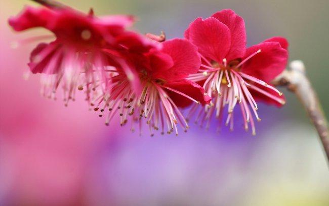Розовые цветки на ветке дерева