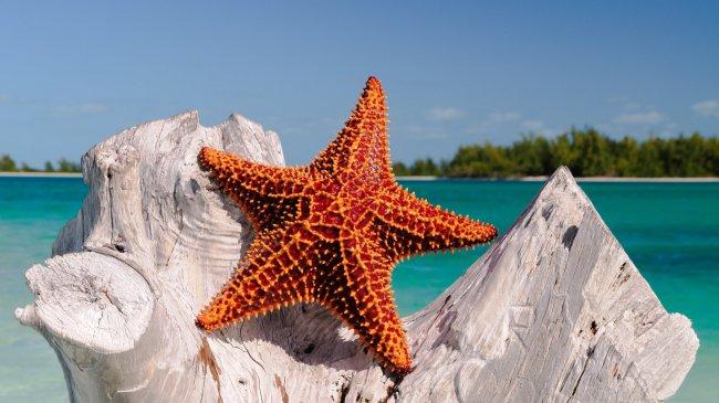 Морская звезда на высохшем дереве