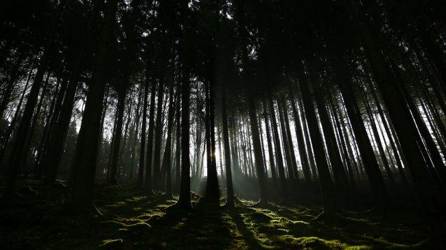Тени и свет сквозь деревья