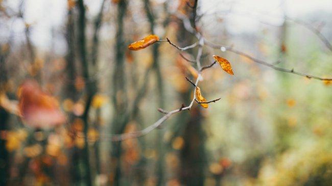 Сухие листья на ветке дерева