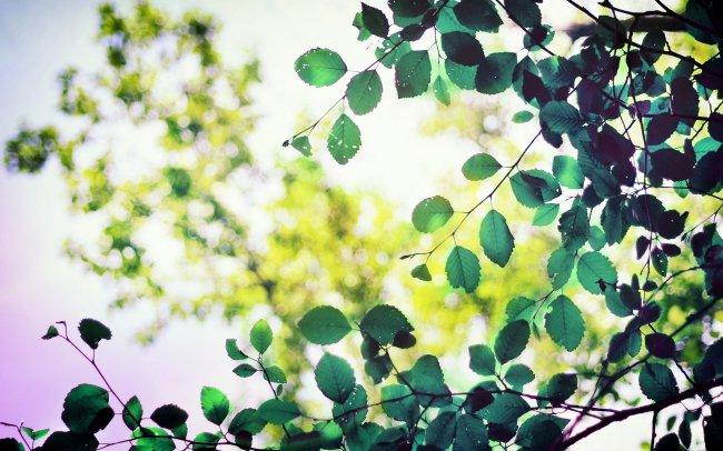 Зеленая листва