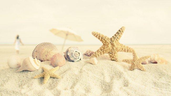 Ракушки и морские звезды