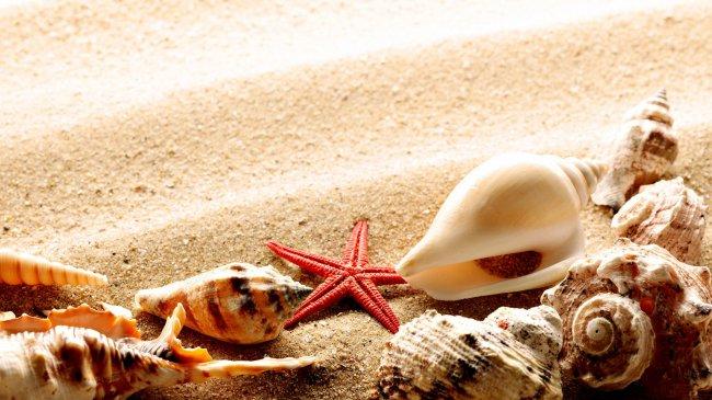 Морская звезда и ракушки на пляжном песке