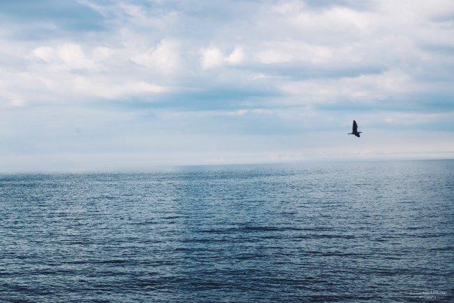 Полет птицы над морем
