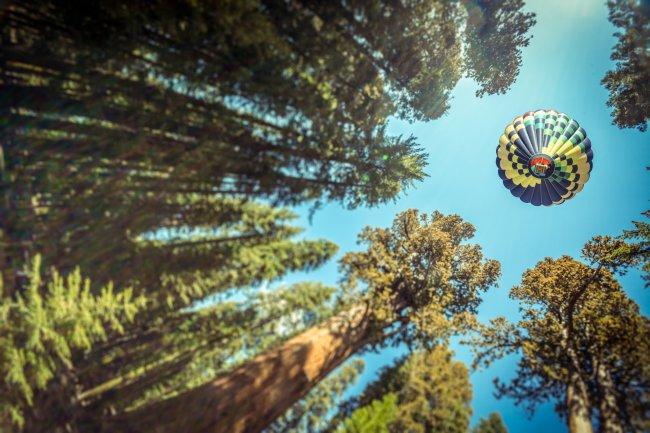 Воздушный шар над деревья
