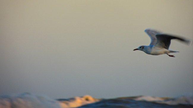 Летящая чайка в небе