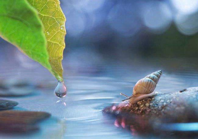 Улитка на камне у воды