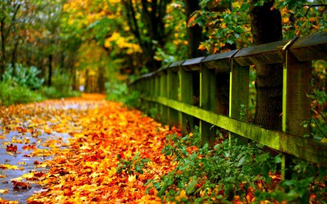 Дорога с осенними листьями