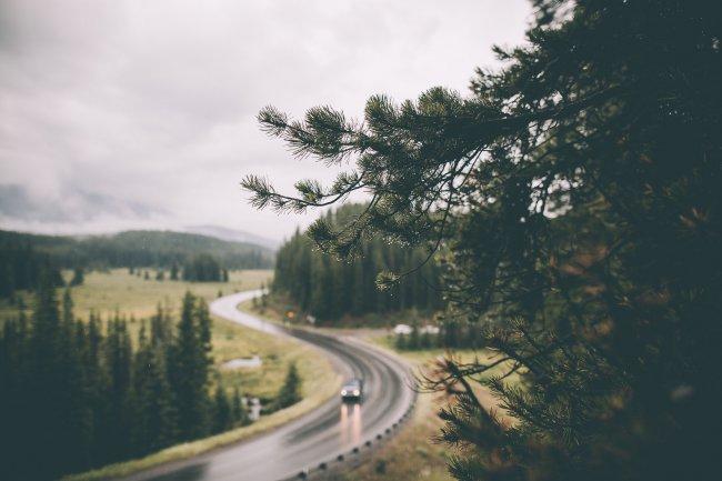 Сосновые ветки в дождливую погоду