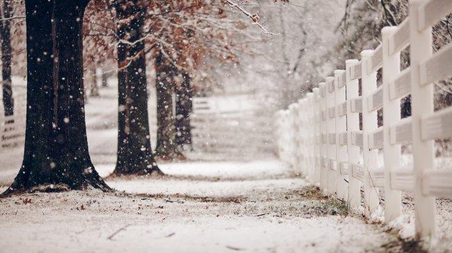 Снег в парке