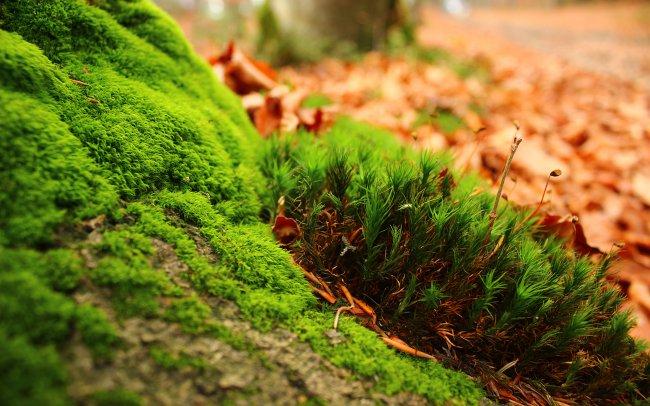 Пожелтевшие и опадающие листья с деревьев у дороги