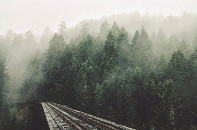 Железная дорога сквозь туманный лес