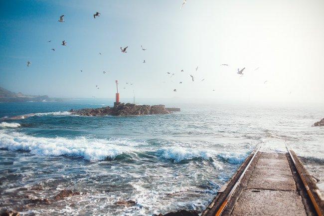 Чайки у берега моря